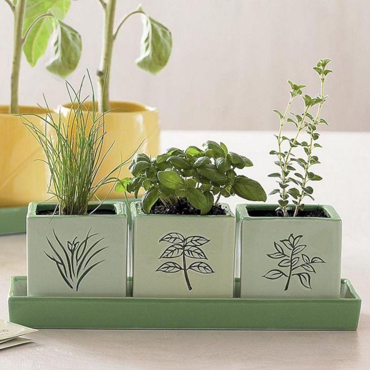 Indoor Herb Garden 330