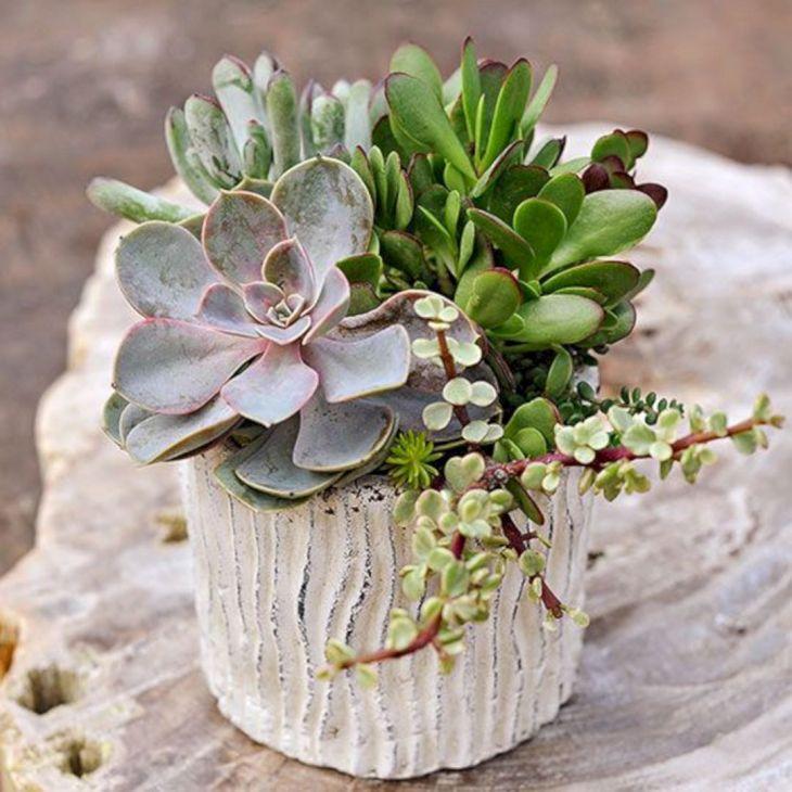 Indoor Succulent Garden 111