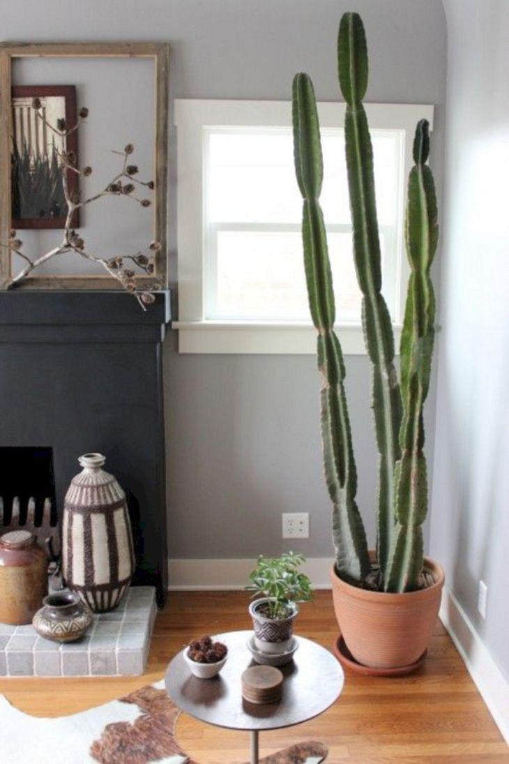Indoor Succulent Garden 119