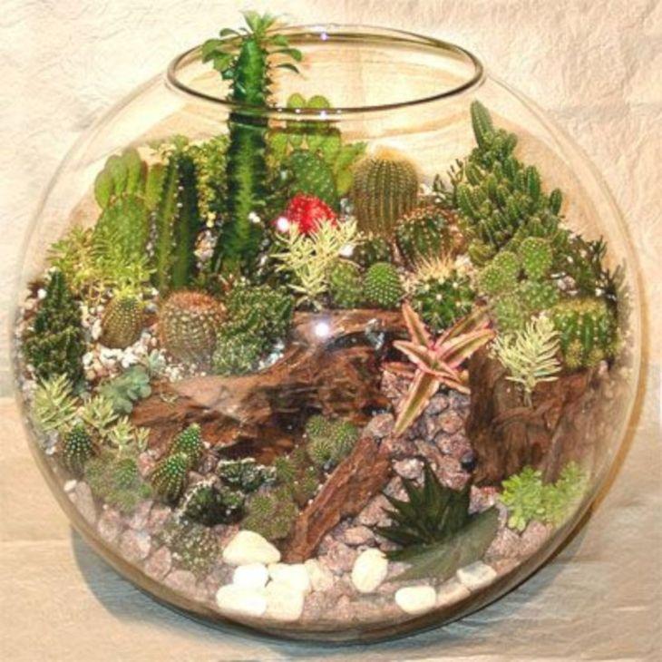 Indoor Succulent Garden 123