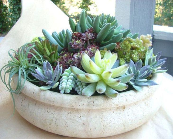 Indoor Succulent Garden 126