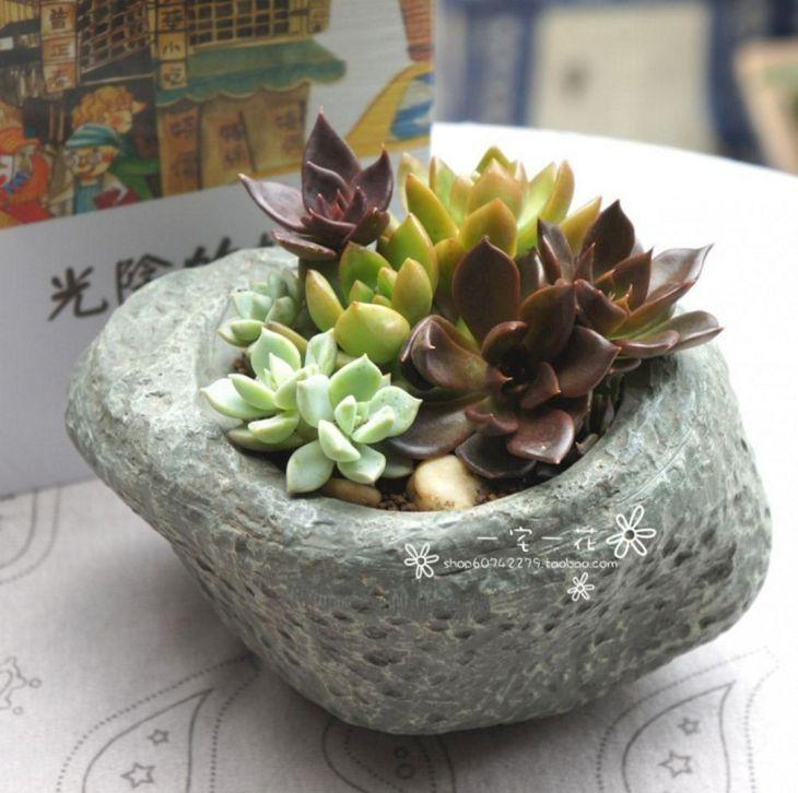 Indoor Succulent Garden 14