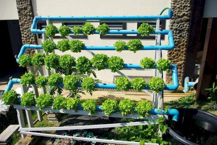 Hydroponic Vegetable Gardens 4