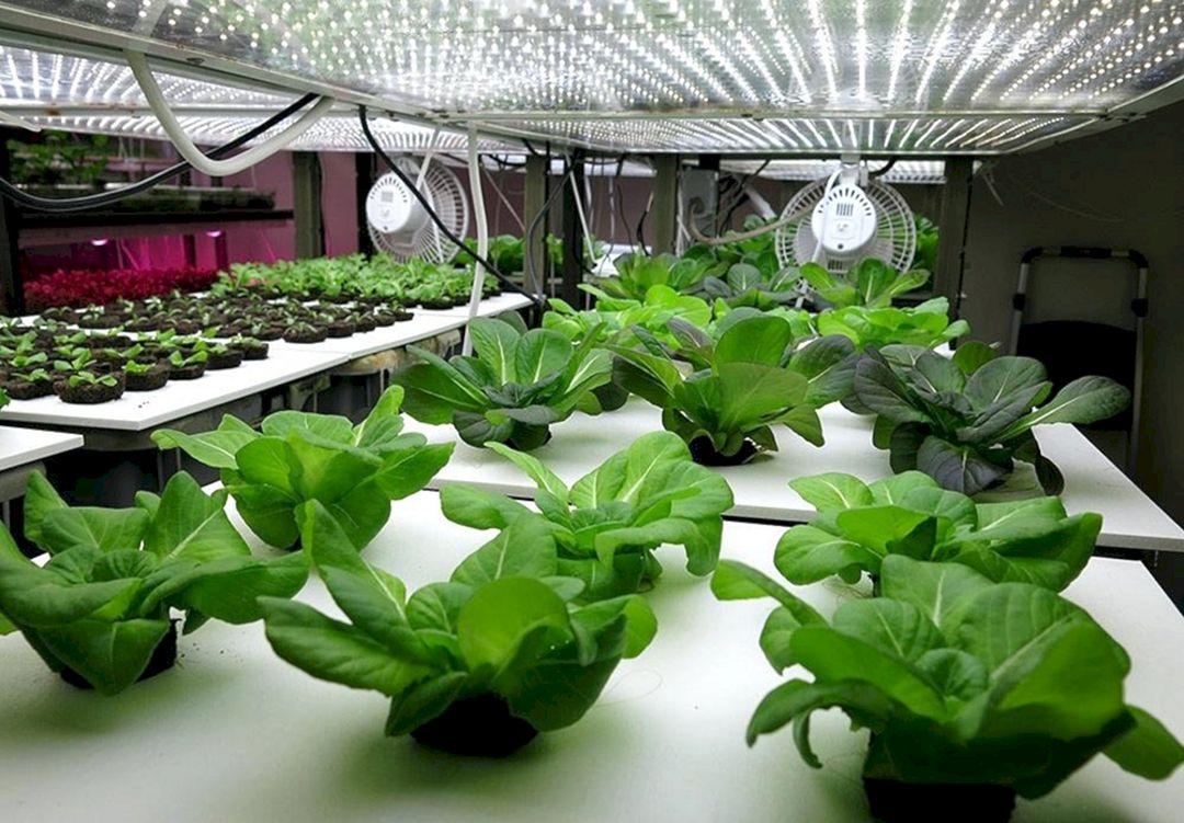Hydroponic Vegetable Gardens 5