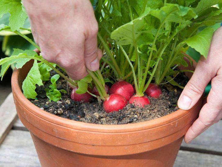 Vegetable Garden in a Large Pot 8