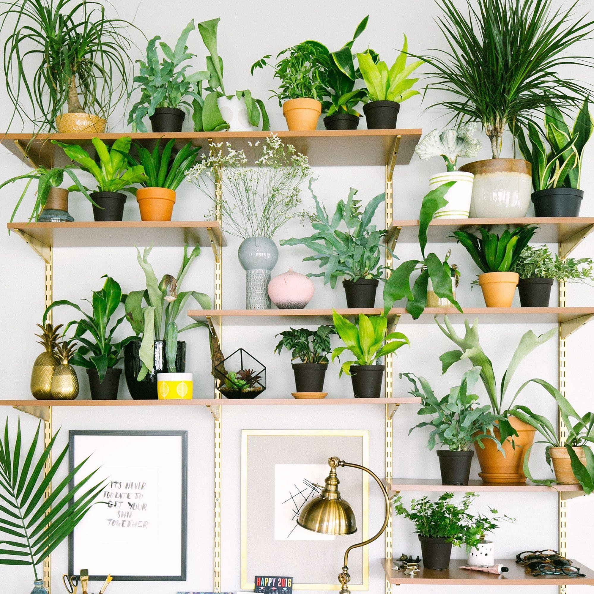 Indoor Plans Shelf Ideas