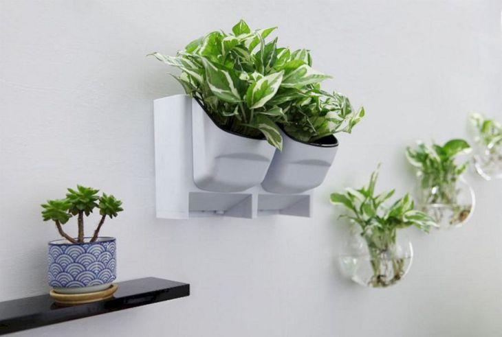 Indoor Wall Plants Design