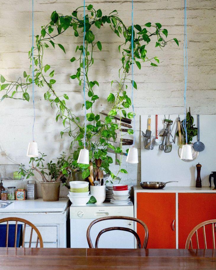 Epipremnum aureum for Kitchen Plant