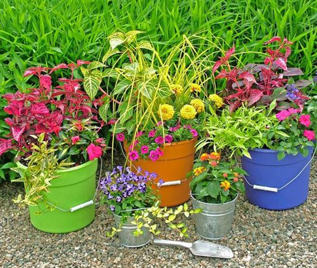 8 Stunning Container Gardening Ideas: 40 Simple But Beautiful Spring Container Gardening Ideas