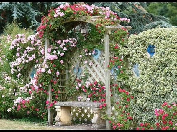 Best Plants for a Cottage Garden and Design Ideas 30
