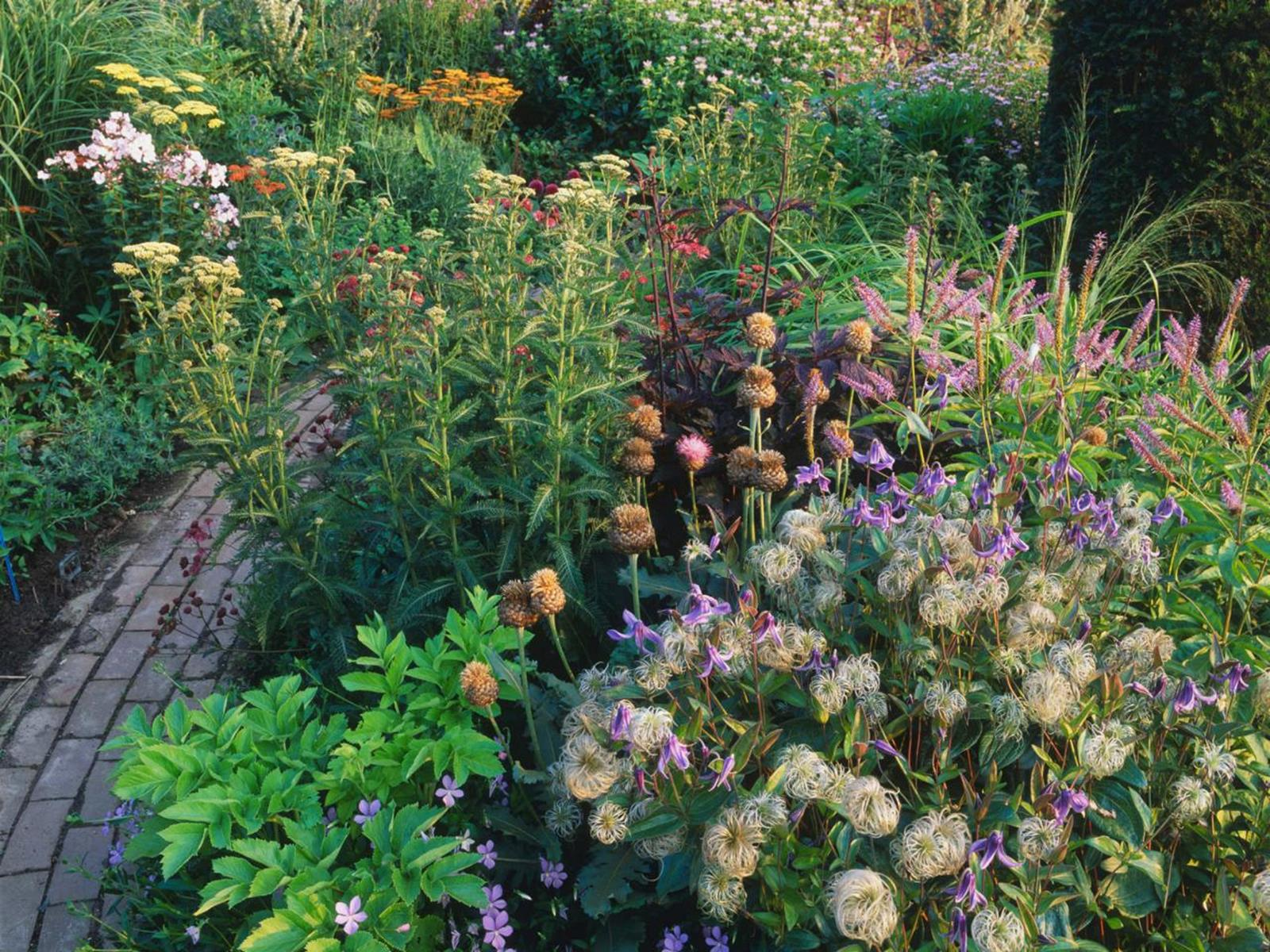 Best Plants for a Cottage Garden and Design Ideas 36