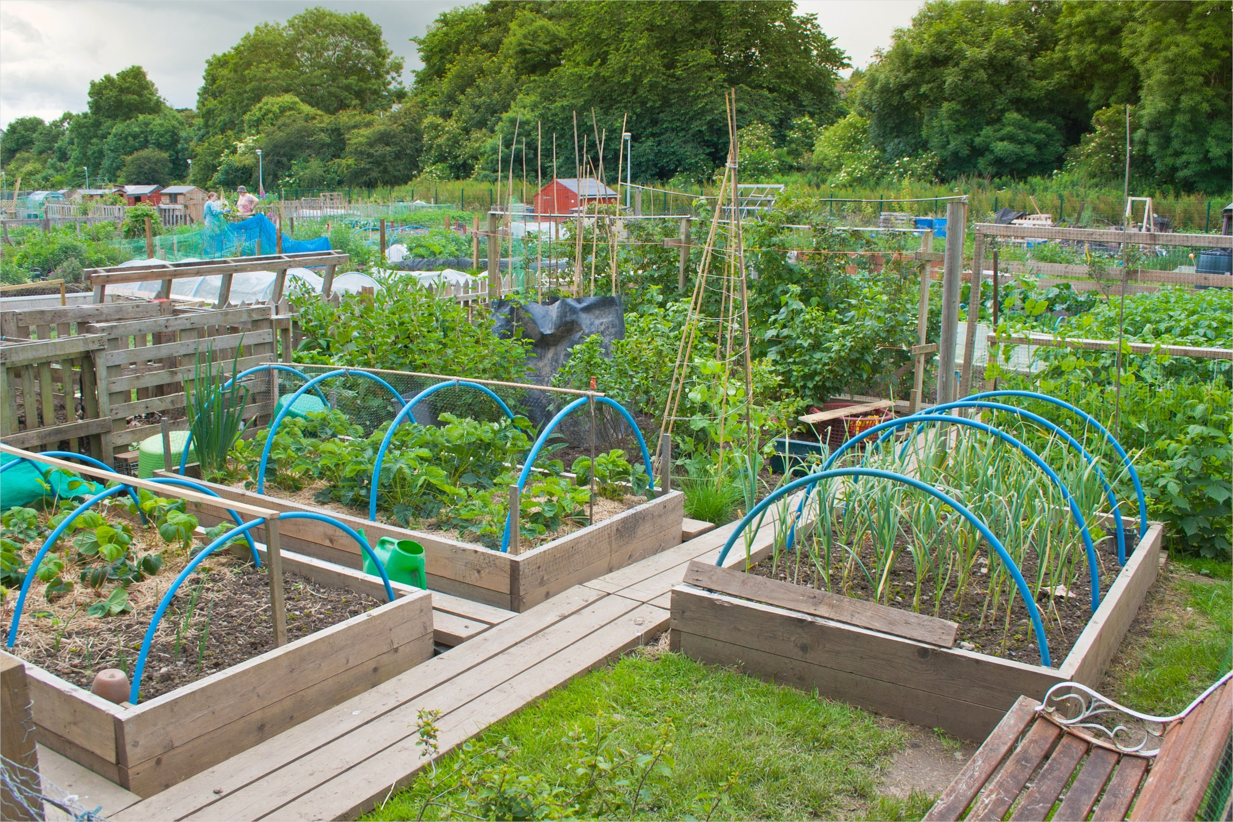 Vegetable Garden Designs 25 Backyard Ve Able Garden Home Design with Diy Wood Raised Bed and Fence Ideas 3