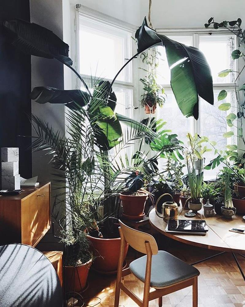 Urban Jungle Room Decor 20