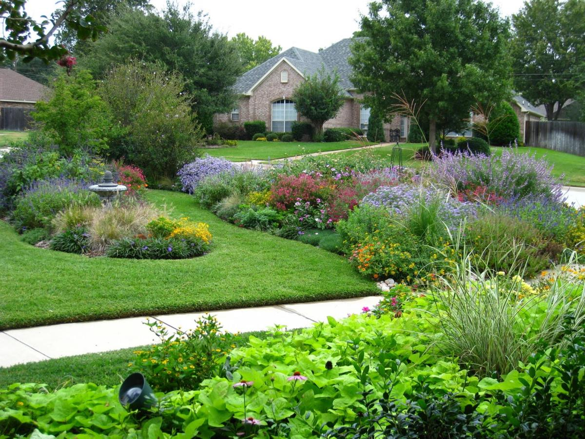 Perennial Plant Front Yard 16