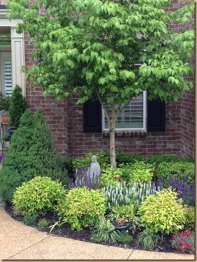 Perennial Plant Front Yard 7