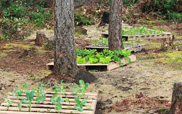 Gardening Ideas With Wood Pallets 17