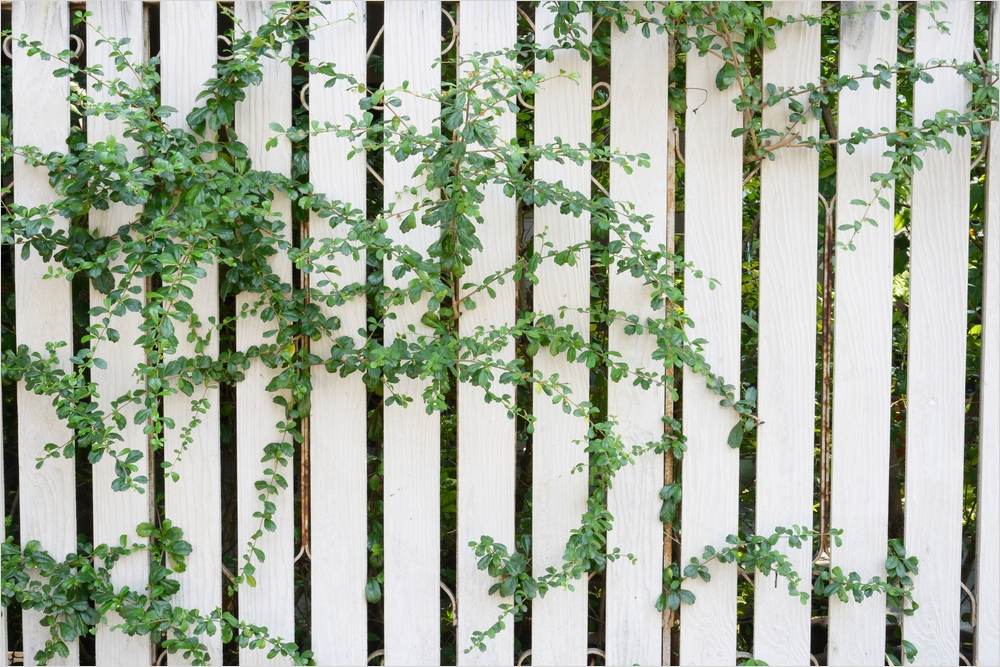 40 Best and Beautiful Climbing Flowers for Fences 27 3 Ways to Make Fences More attractive 6