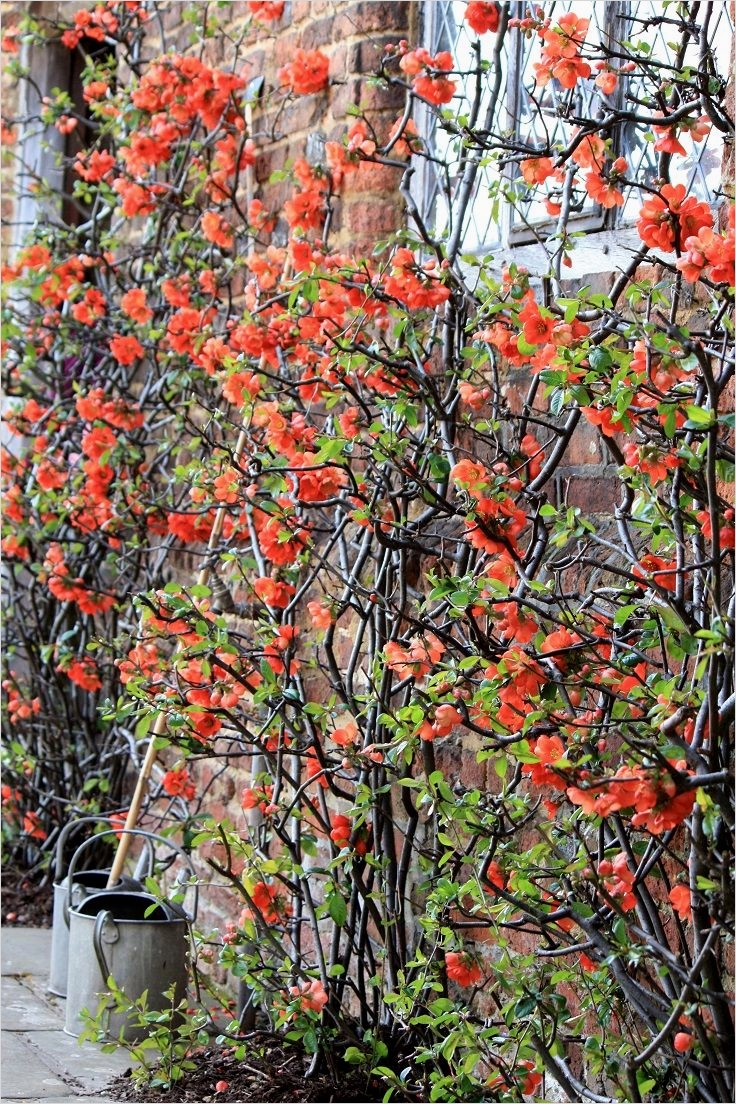 40 Best and Beautiful Climbing Flowers for Fences 32 top 10 Beautiful Climbing Plants for Fences and Walls 2