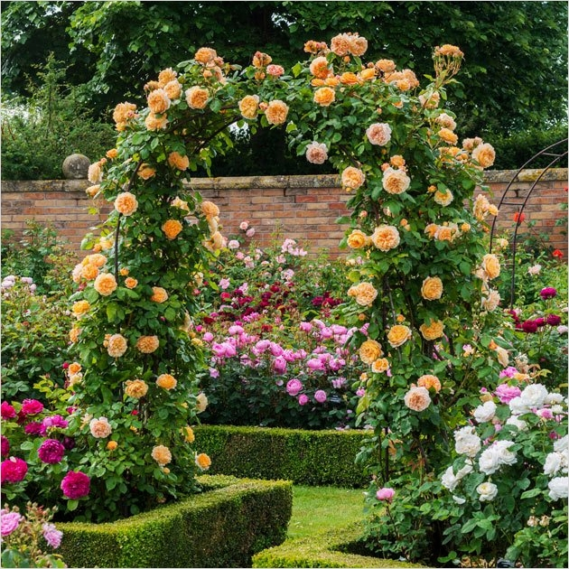 40 Best and Beautiful Climbing Flowers for Fences 88 Climbing Plants & Living Fence Ideas Coffee Break Time 8