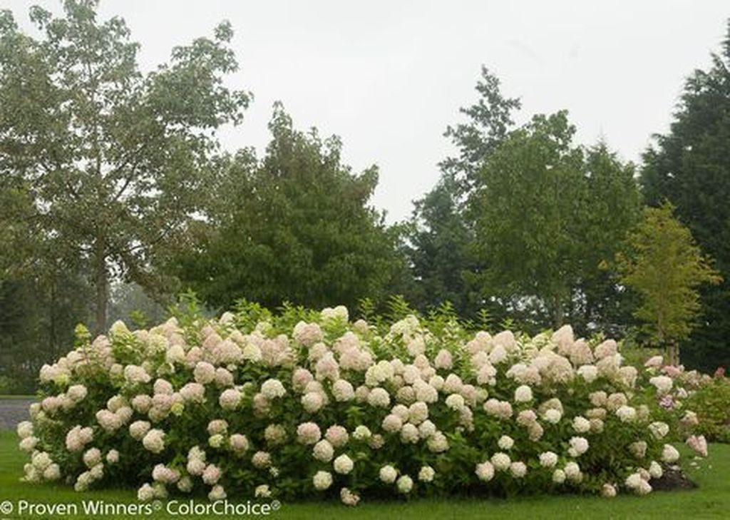 Inspiring Hydrangeas Landscaping Design Ideas To Copy Right Now 07