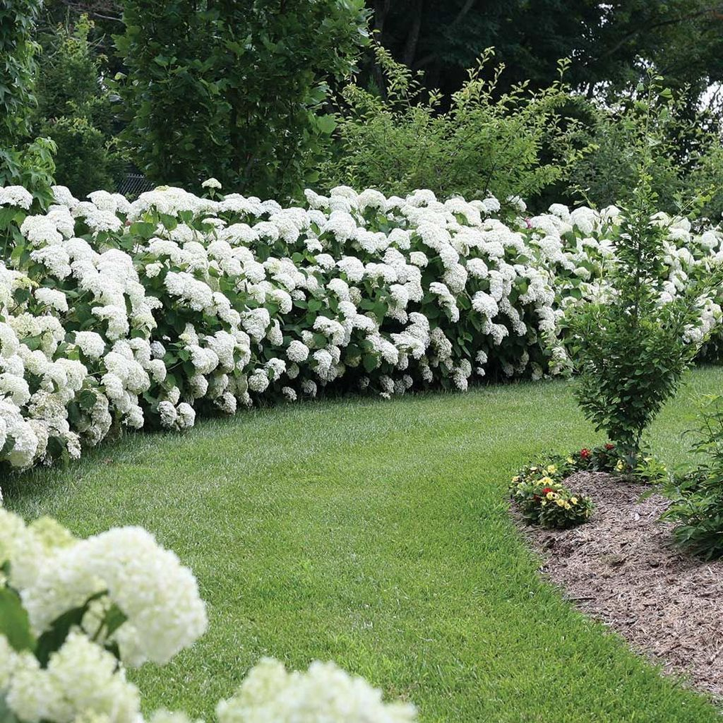 Inspiring Hydrangeas Landscaping Design Ideas To Copy Right Now 13