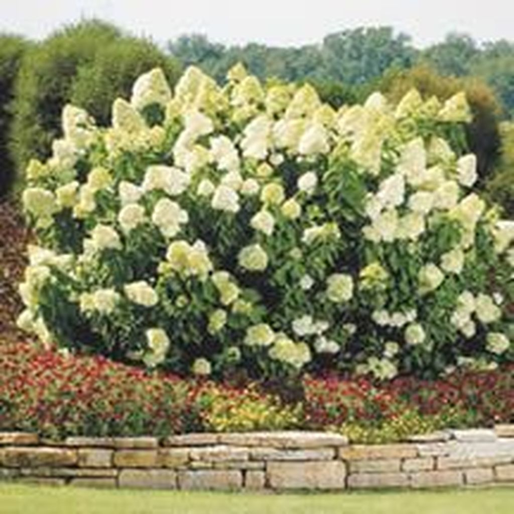 Inspiring Hydrangeas Landscaping Design Ideas To Copy Right Now 24