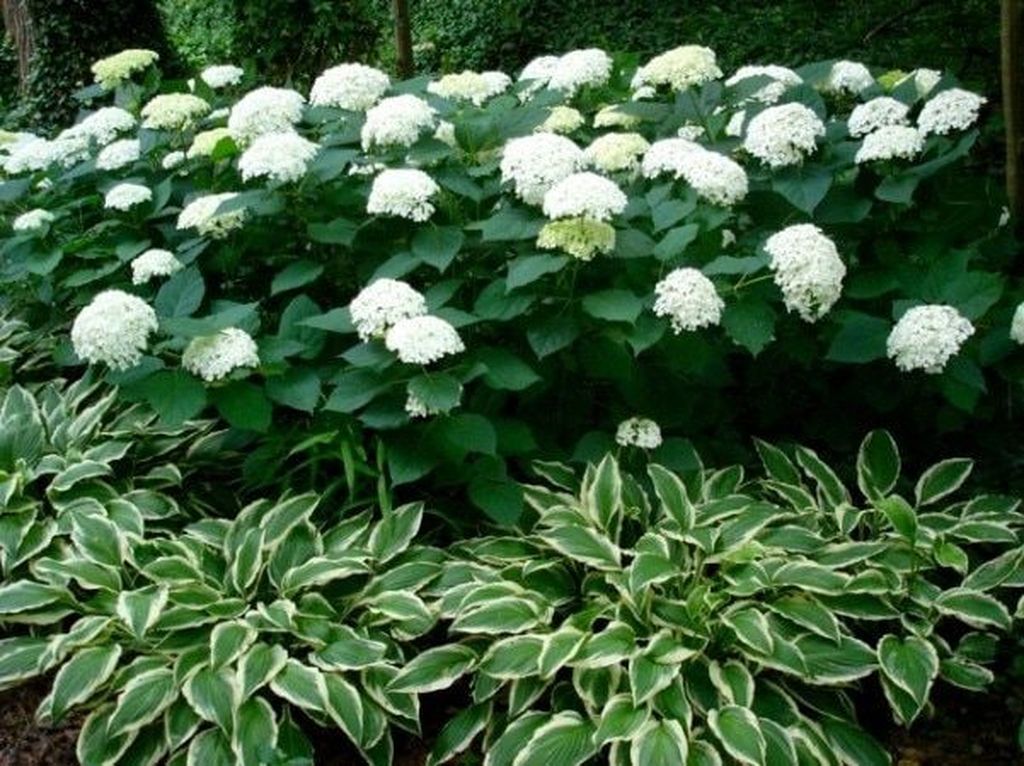 Inspiring Hydrangeas Landscaping Design Ideas To Copy Right Now 28