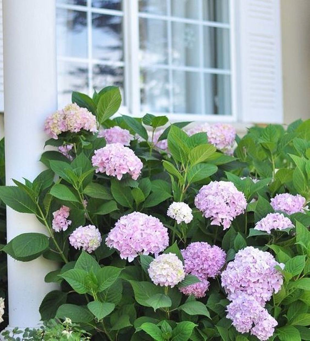 Inspiring Hydrangeas Landscaping Design Ideas To Copy Right Now 36