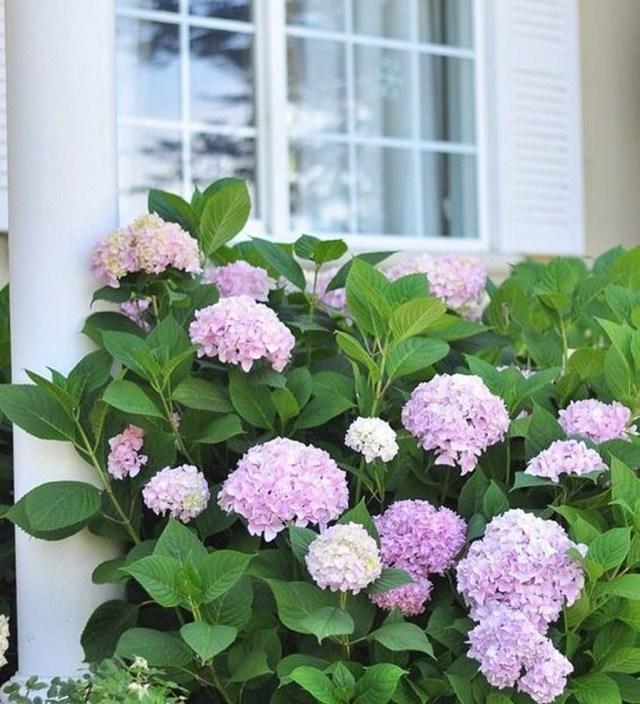 Inspiring Hydrangeas Landscaping Design Ideas To Copy Right Now 36