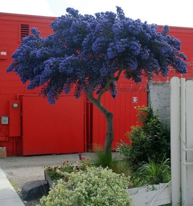 Lovely Flowering Tree Ideas For Home Yard To Copy Now 05