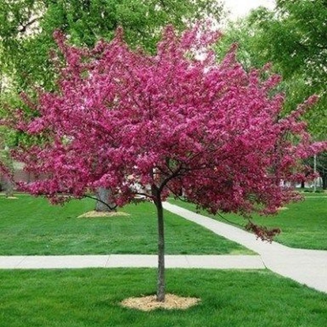 Lovely Flowering Tree Ideas For Home Yard To Copy Now 09