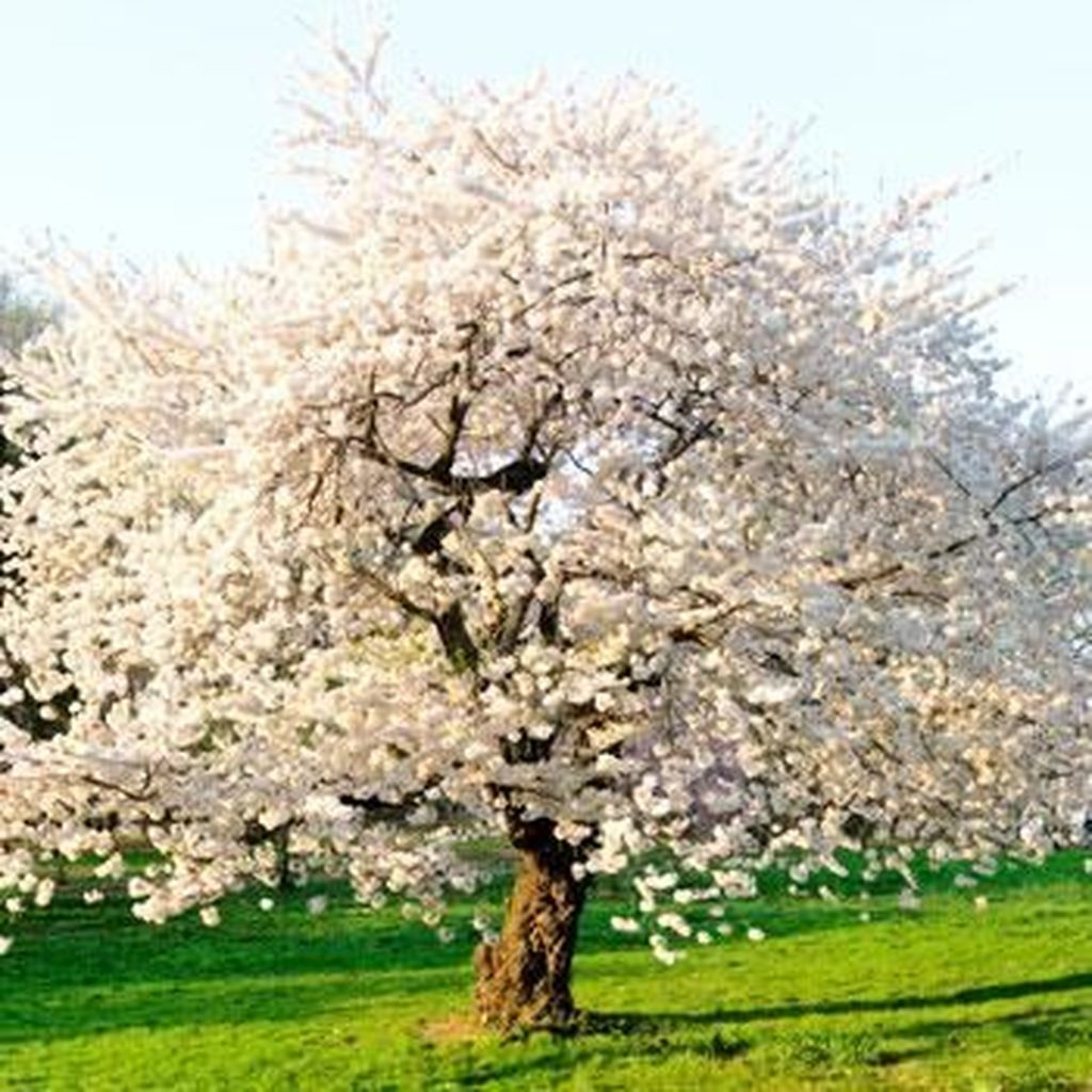 Lovely Flowering Tree Ideas For Home Yard To Copy Now 10