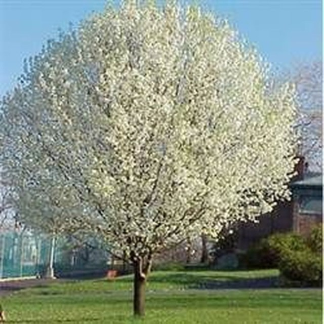Lovely Flowering Tree Ideas For Home Yard To Copy Now 22