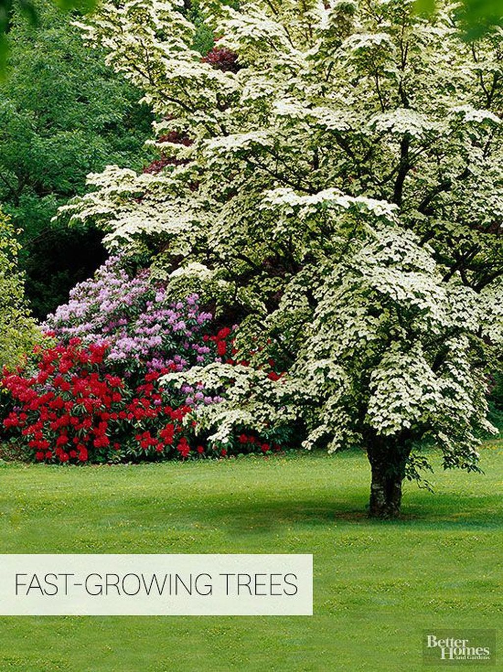 Lovely Flowering Tree Ideas For Home Yard To Copy Now 23