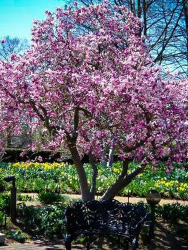 Lovely Flowering Tree Ideas For Home Yard To Copy Now 32