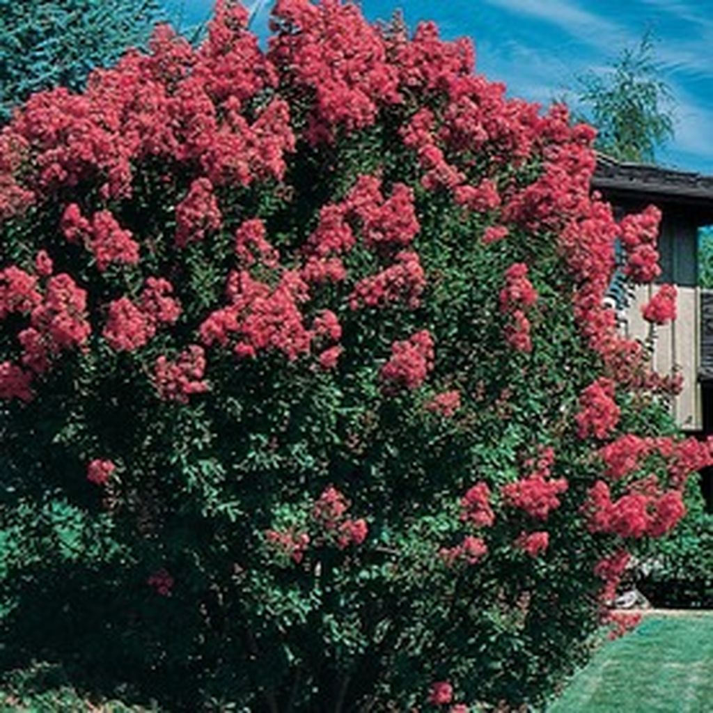 Lovely Flowering Tree Ideas For Home Yard To Copy Now 33