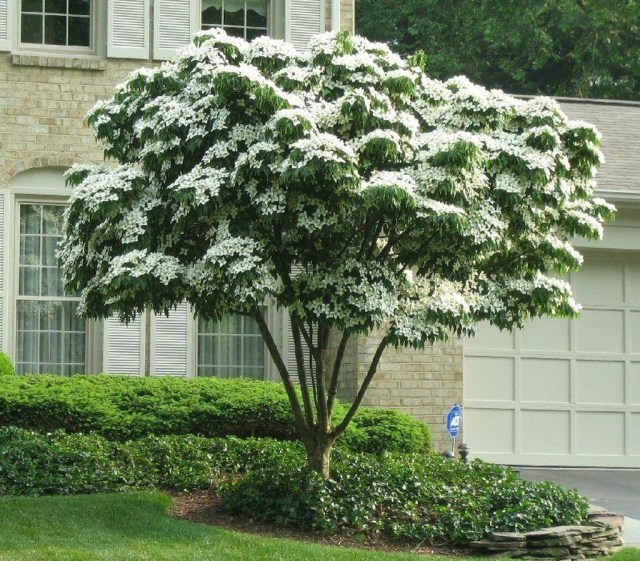 Lovely Flowering Tree Ideas For Home Yard To Copy Now 36