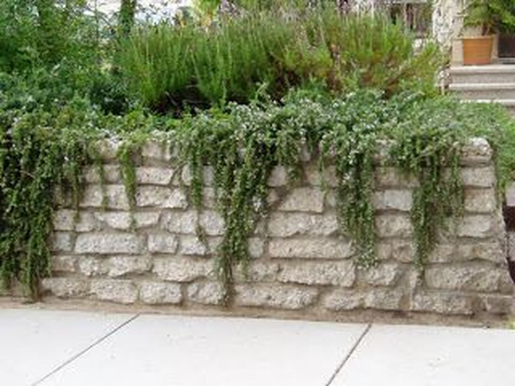 Rustic Wall Outdoor Concrete Ideas For Inspiration 09
