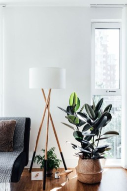Smart Interior Design Ideas With Plants For Home 06