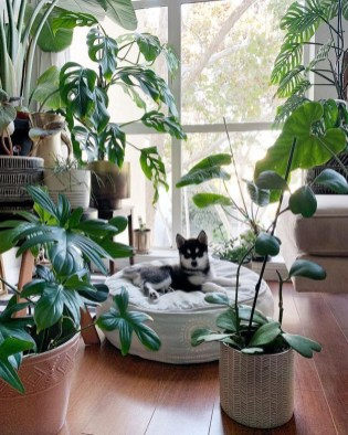 Smart Interior Design Ideas With Plants For Home 18