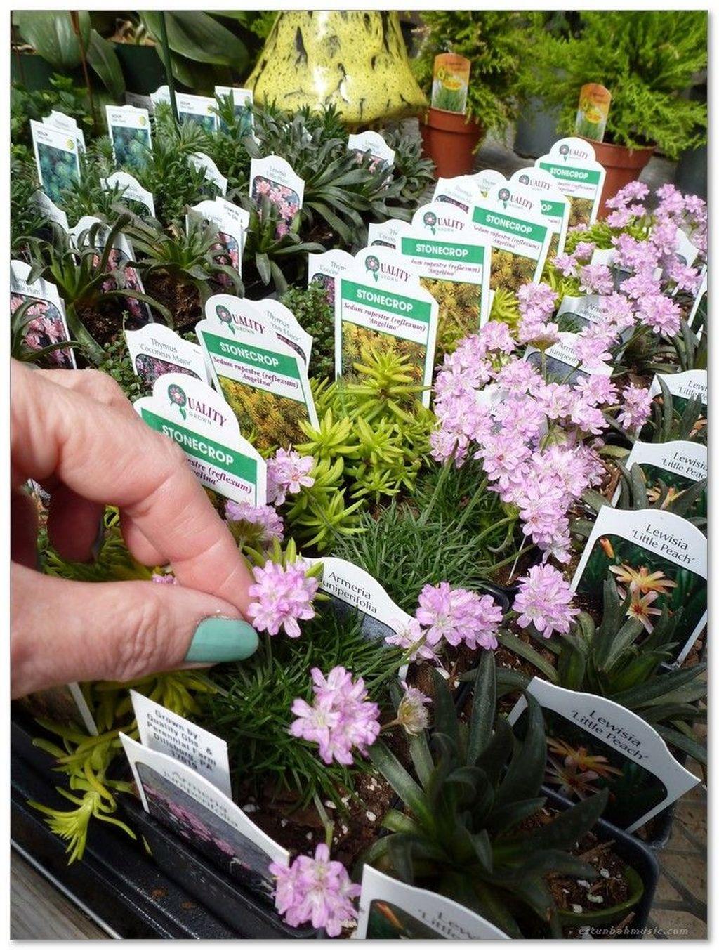 Unordinary Magical Fairy Garden Design Ideas To Try 47