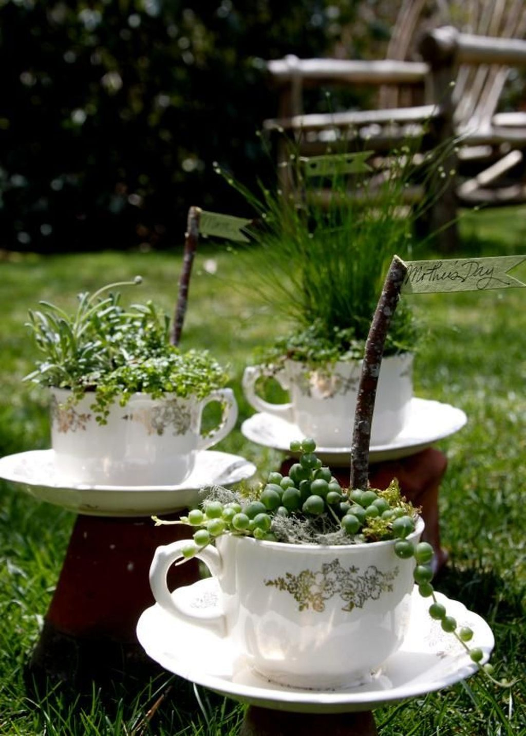 Inspiring Diy Teacup Mini Garden Ideas To Add Bliss To Your Home 06