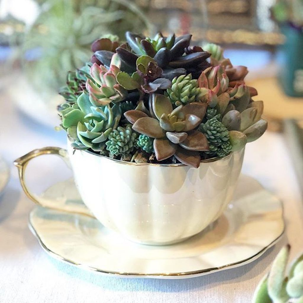 Inspiring Diy Teacup Mini Garden Ideas To Add Bliss To Your Home 09