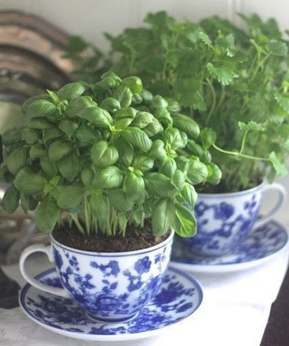 Inspiring Diy Teacup Mini Garden Ideas To Add Bliss To Your Home 16