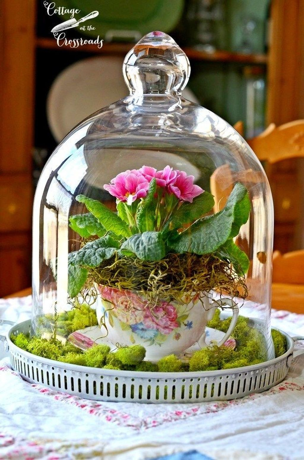 Inspiring Diy Teacup Mini Garden Ideas To Add Bliss To Your Home 32