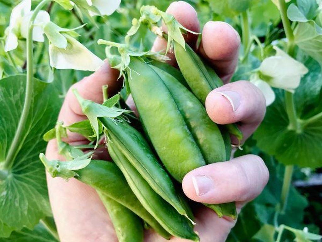 Lovely Vegetable Garden Decoration Ideas For You 10
