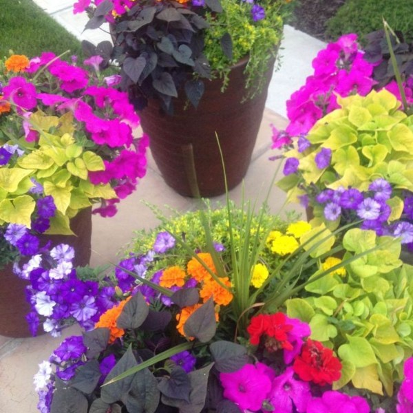 Impressive Summer Planter Design Ideas For Front Yard Decoration 30