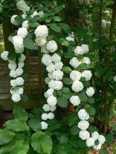 Elegant White Plants Garden Design Ideas For You 19