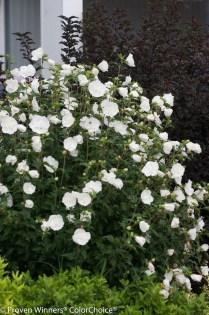 Elegant White Plants Garden Design Ideas For You 22