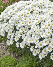 Elegant White Plants Garden Design Ideas For You 23
